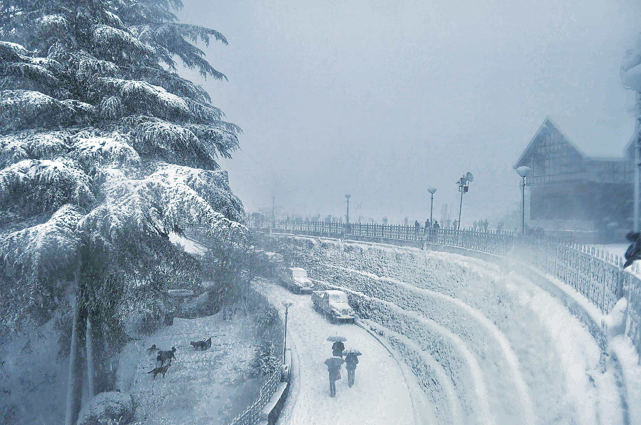 shimla covered with snow