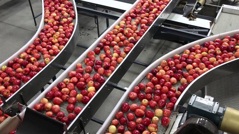 Himachal Apple Production