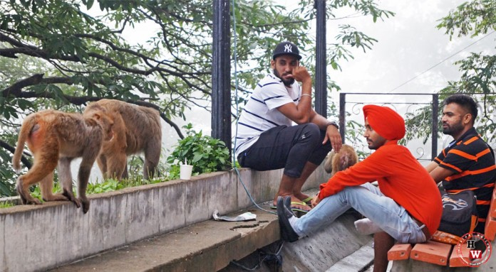 Shimla-Monkeys