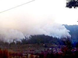 kinnaur-forest-fire