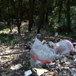 shimal-forest-filled-with-garbage