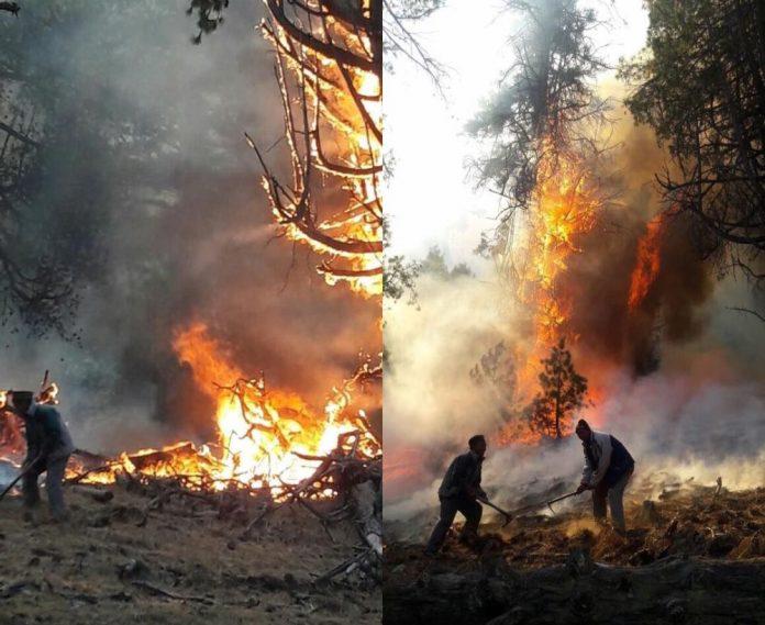 kinnaur-forest-fire