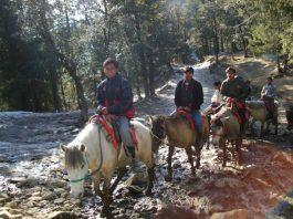 kufri-horse-riding-1