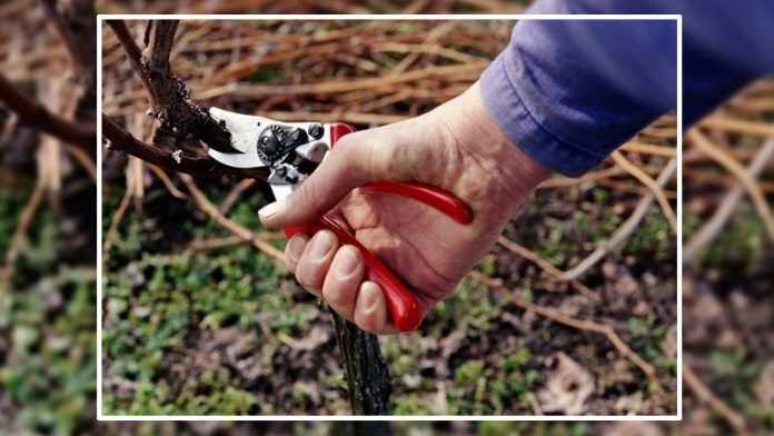 scissors-scam-hp-horticulture-dept