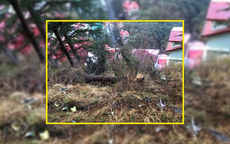 Tree felling Bharari Shimla