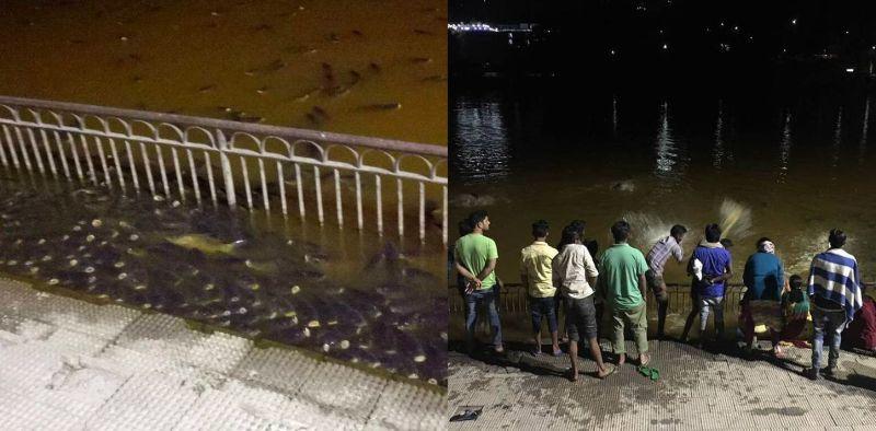 Dead Fish in Rewalar lake