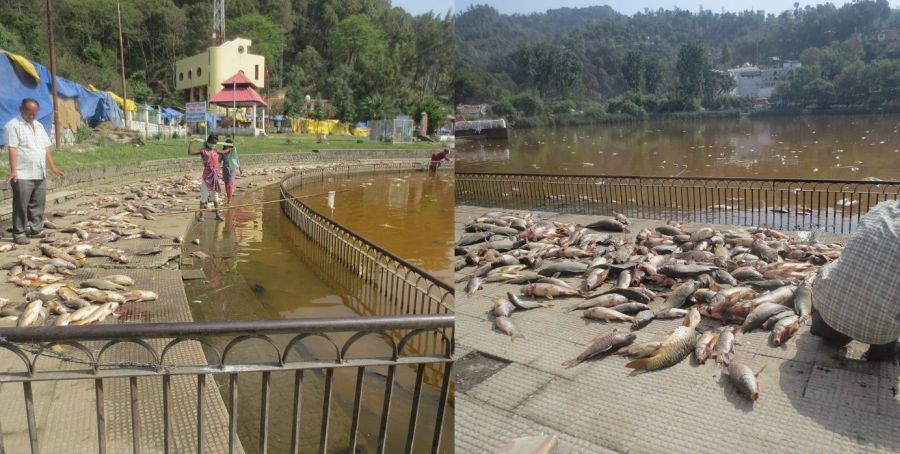 Polluted Rewalsar lake