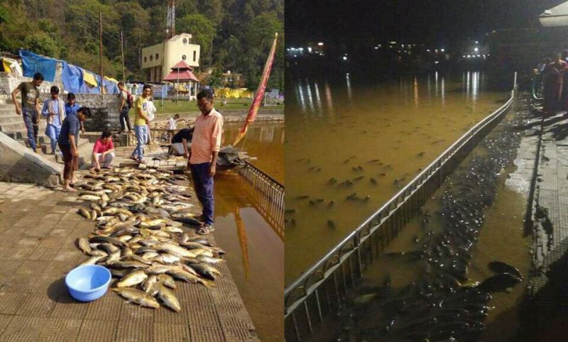 fishesh died in Rewalsar lake Mandi