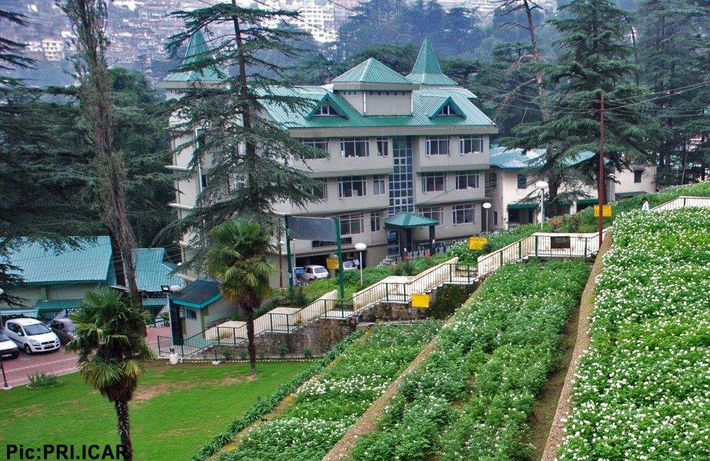 Central Potato Research Centre Shimla