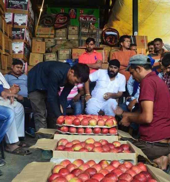 Apple proccurement support price in Himachal PRadesh