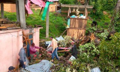 damage to crops in himachal pradesh
