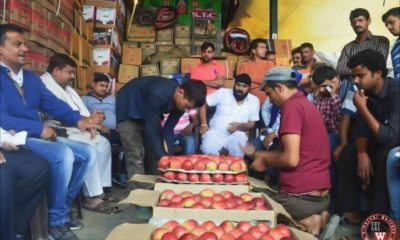 drop in himachal apple prices